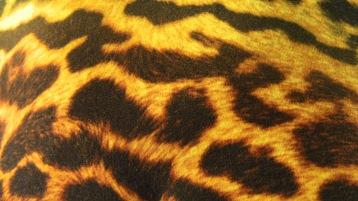 animal=beauty_case_1-interior-close_up